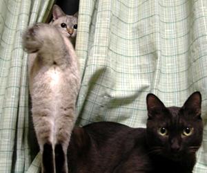 ウッディ&シータ