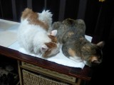 ZAZAとVIVIが珍しく同じ恰好で寝ています